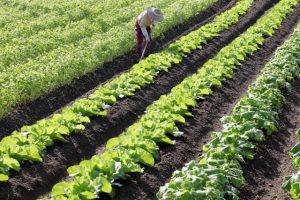農地大規模化を後押し